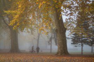 L'or d'automne